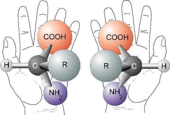 Right handed, left handed amino acids